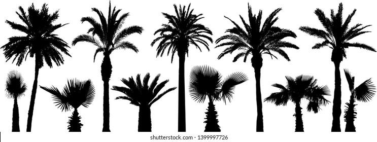 Palm tropical trees. Silhouette vector set