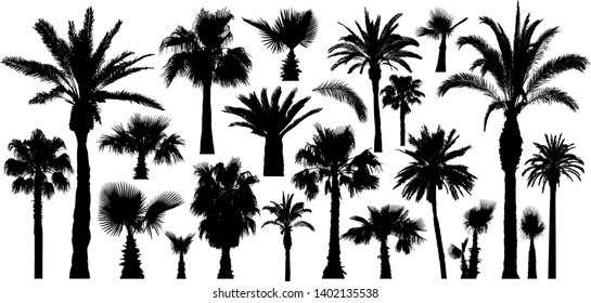 Palm tropical trees silhouettes. Isolated on white background. Vector set
