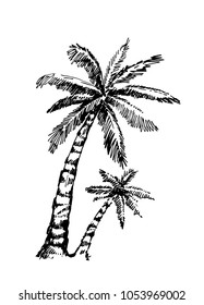 palms. sketch. Hand drawn