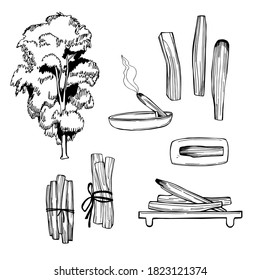 Palo Santo (Bursera graveolens) holy wood tree  from Latin America. Incense sticks for cleansing home and aura.  Vector sketch  illustration.