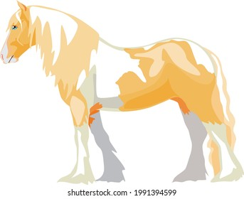 The Palomino piebald horse is a Gypsy harness horse, Tinker or Irish Cob. Vector illustration