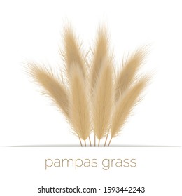 Pampas golden grass copy space on stripe. Vector illustration. panicle Cortaderia selloana South America. ornamental grass. feathery grass head plumes, for floral arrangements, displays, decoration