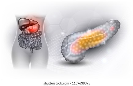 Female Internal Organs Diagram Images Stock Photos Vectors