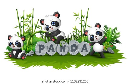 panda are playing together in garden