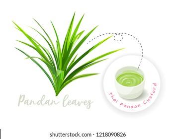 Pandan leaves and pandan steamed custard, vector illustration and design.