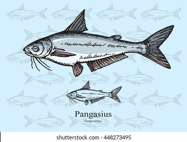 Pangasius Fish. Vector illustration with refined details and optimized stroke that allows the image to be used in small sizes (in packaging design, decoration, educational graphics, etc.)