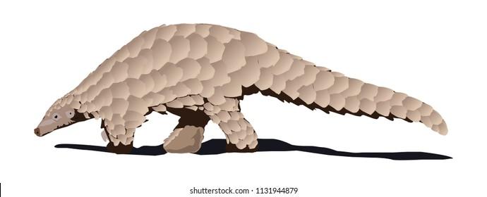 pangolin vector animal
