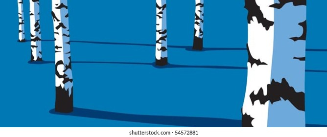 Panorama of birch trees in the winter