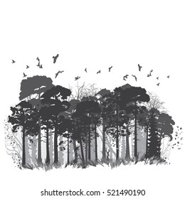 Panorama of wild coniferous forest. Vector illustration