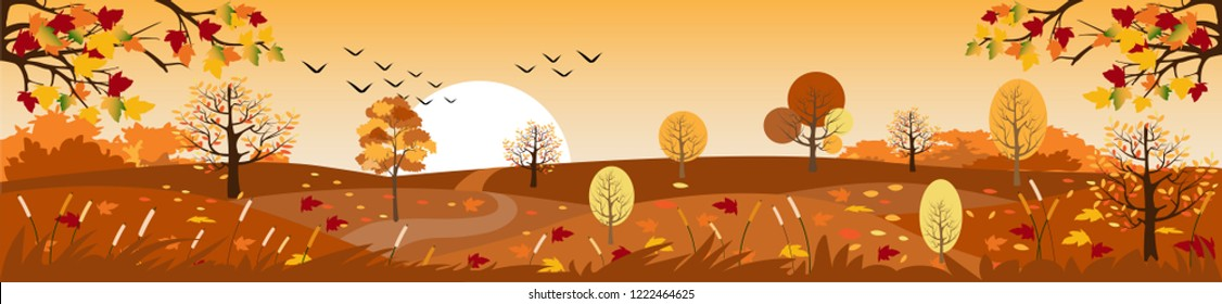 Panoramic of Countryside landscape in autumn, Vector illustration of horizontal banner of autumn landscape mountains and maple trees fallen with yellow foliage,Panorama autumn view in evening with sun