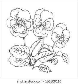 Pansy. Sketch Black and White. Vector illustration