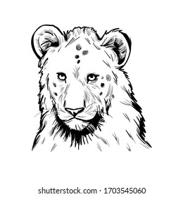 Panthera leo muzzle portrait in closeup. Mammal with black furry coat, feline animal. Predator from wild environment, drawing with isolated brush. Carnivore creature vector illustration.