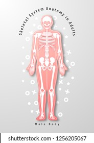 Paper art of Skeletal System Anatomy in Adults with male body abstract design vector