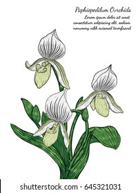 paphiopedilum orchid card by hand drawing.Orchids vector card on white background.