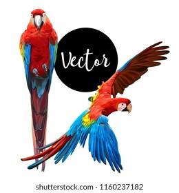 Parrot Ara Hand Drawn Vector Set