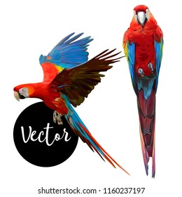 Parrot Ara Hand Drawn Vector Set