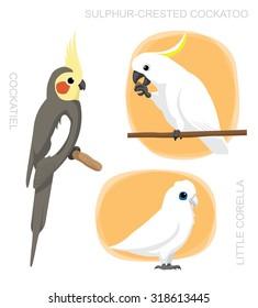Parrot Cockatiel Corella Cockatoo Cartoon Vector Illustration