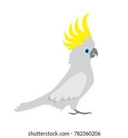 Parrot cockatoo. Australian bird cartoon illustration. Vector image.