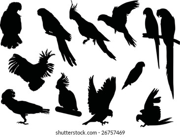 parrot silhouettes collection isolated on white background