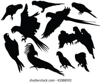 parrot silhouettes - vector
