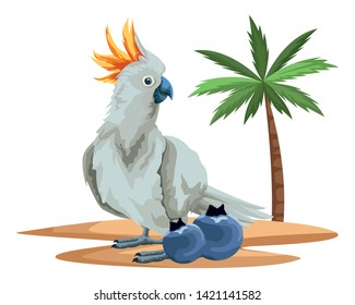 parrot wild cockatoo with bluberries icon cartoon over sand with palm background vector illustration graphic design