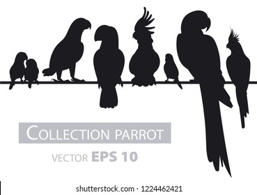 Parrots. Black silhouette Isolated birds on white background. Tropical birds. Vector illustration.