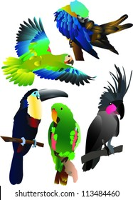 parrots collection two