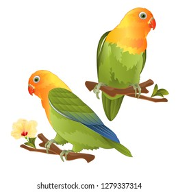 Parrots lovebird Agapornis tropical bird  standing on a branch on a white background vector illustration editable hand draw