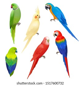Parrots realistic. Wildlife flight exotic colored birds beautiful amazonia tropical life vector parrots illustrations