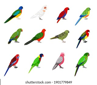Parrots set. Cartoon birds with colourful feathers, tropical characters of zoo with beak and feathers, vector illustration of colored parakeets isolated on white background