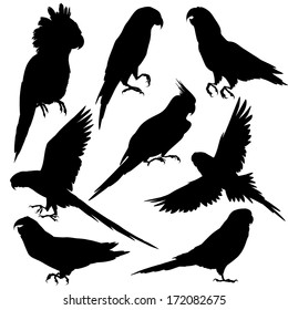 Parrots silhouettes. Vector illustration isolated on white