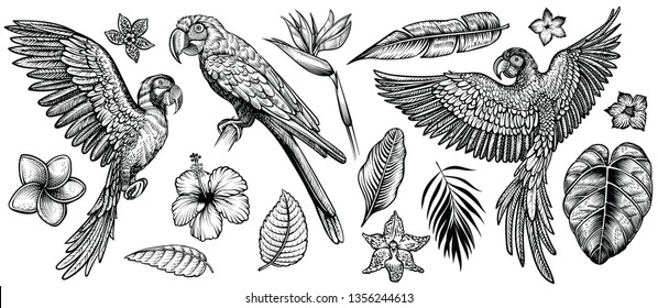 Parrots with tropical flowers, hand drawn line vector collection. Macaw flying parrot and sitting ara. Paradise exotic flowers and leaves. Engraving art design, isolated elements on white background