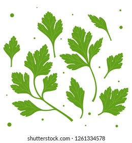 Parsley. Green parsley leaves. Vector illustration of a plant on a white background.