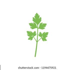 Parsley icon.  Flat parsley illustration on white background. Green parsley vector.  Fresh parsley.