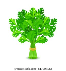 Parsley isolated on white photo-realistic vector illustration