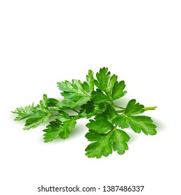 Parsley low poly. Fresh green plant, nutritious, tasty green parsley. Vector illustration. Vegetables ingredients in triangulation technique.