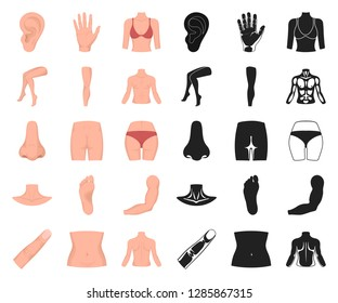 Part of the body, limb cartoon,black icons in set collection for design. Human anatomy vector symbol stock web illustration.