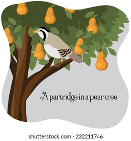 A partridge in a pear tree EPS 10 vector illustration
