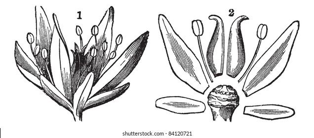flowers reproductive parts images  stock photos  u0026 vectors