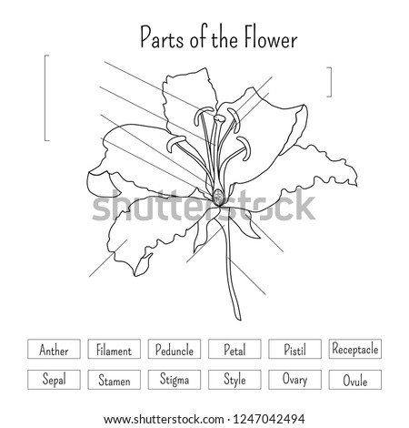 GCSE Biology  Plant Reproduction Worksheet Pack by beckystoke further Label The Parts Of A Flower Worksheet Parts Of A Plant Diagram together with Fantastic Shareworksheets Free   Plants Parts Flower Blank Parts further Parts of a Flower   Madebyteachers in addition Parts Of A Plant Coloring Page Parts Of A Flower For Kids Worksheet together with Basic Parts Of A Flower Worksheet   Kayaflower co furthermore Plant reproduction worksheet as well Parts Of The Plant Worksheet Worksheet Structure Of A Flower together with Label the Parts of a Flower Worksheet   Home Helper Online additionally What Parts Of A Plant Do We Eat Worksheet For Grade Interesting Free together with Plant Reproduction Click to Enter    ppt video online download also  together with Parts Flower Worksheet Black White Lily Stock Vector  Royalty Free also Parts Of A Flower Diagram For Kids Diagram Plant Parts Flower moreover Plant Worksheet Potted Plant Worksheet Plant Adaptations Worksheets together with Flowery Plants – Free Plant Worksheet for Middle – JumpStart. on parts of a flower worksheet