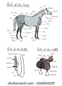 Parts of horse, saddle, bridle set. Equine anatomy. Equestrian scheme text. The terms of riding tack gear tool harness. Cartoon vector  hand drawing of snaffle, stirrup, bit, belt, reins, buckle