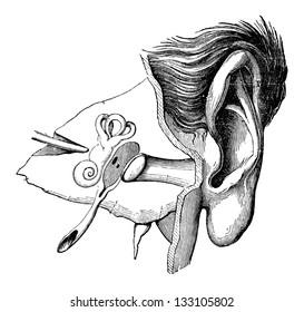 Parts of the Human Ear, vintage engraved illustration. Industrial Encyclopedia - E.O. Lami - 1875