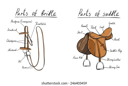 Parts of the Saddle Stock Vectors, Images & Vector Art | Shutterstock