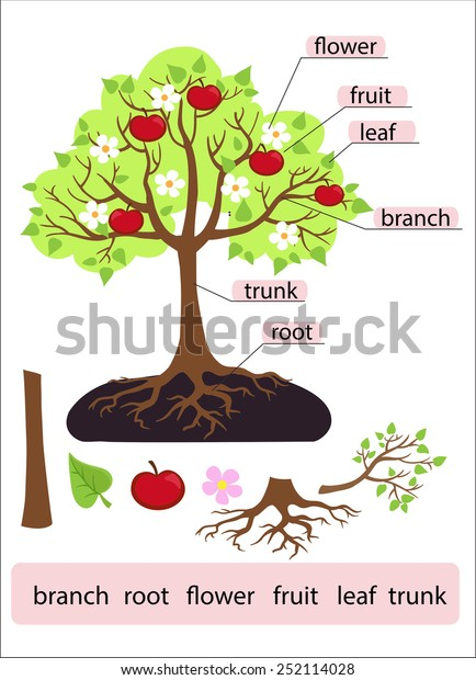 Parts Treeclipart Tree Structure Trunk Root Stock Vector (Royalty