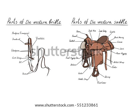 parts western saddle bridle text letters stock vector royalty free rh shutterstock com