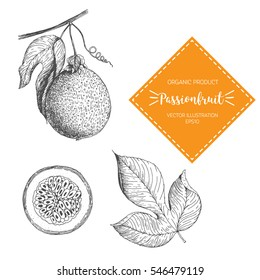 Passion Fruit vector illustration. Hand-drawn design element. A fruit drawn in vintage style