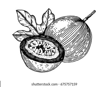 Passion fruit vector illustration. Scratch board style imitation. Hand drawn image.