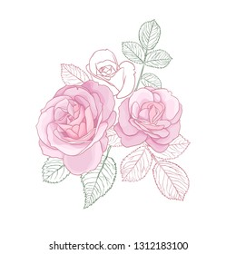 Pastel Pink Roses with Contour Leaves Bouquet Isolated on White Background. Vector Illustration.