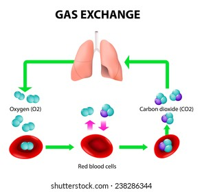 Carbon cycle images stock photos vectors shutterstock oxygen transport cycle both oxygen and carbon dioxide are ccuart Images
