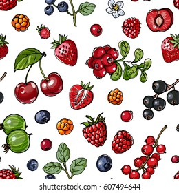 Pattern berries and leaves. Wild berries painted color line on a white background. Cranberry, cranberries, currants, raspberries, strawberries, gooseberries, blueberries, barberries